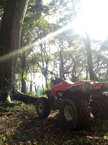 台風一過の森の中を愉しみました