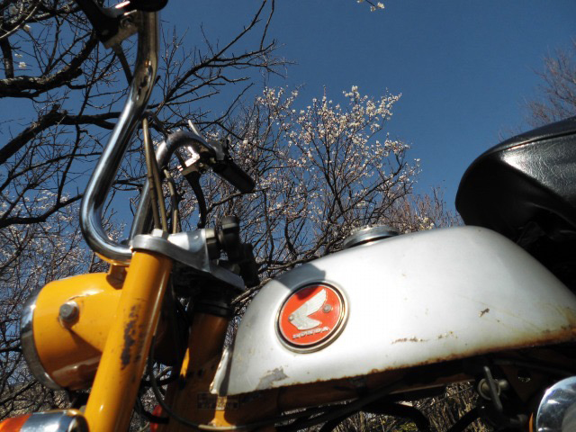 梅が咲いたよ!!!