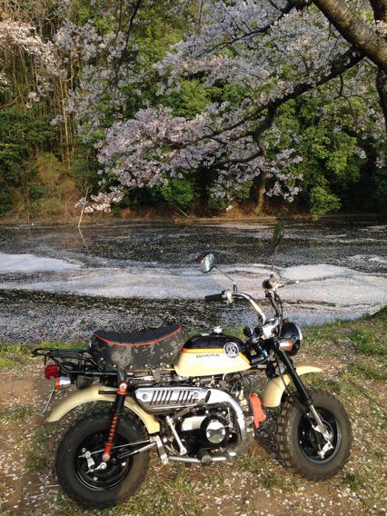 水面に舞いおりた桜の花びら