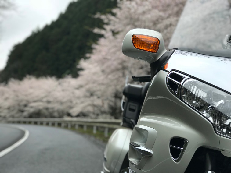 桜吹雪のツーリング