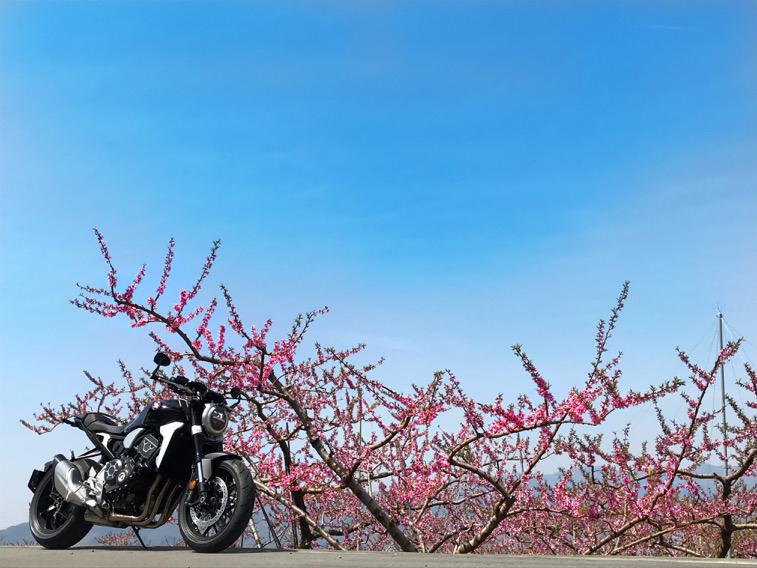春を追いかけて