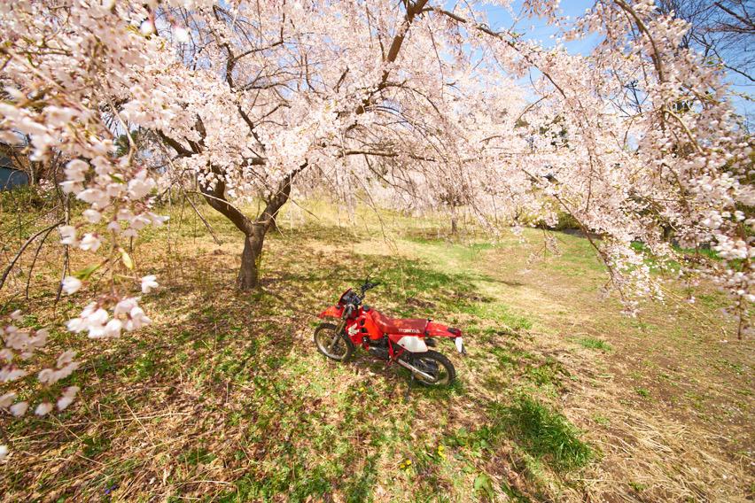 桜の下のCRM
