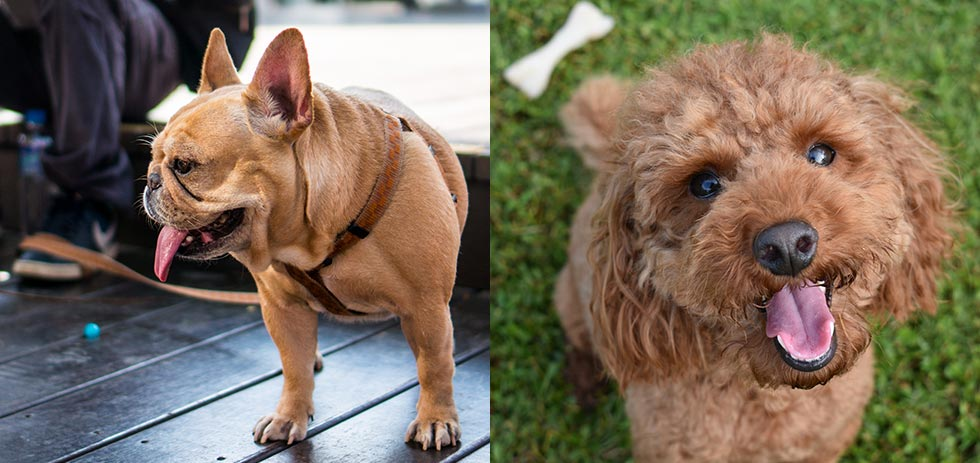 症状 ウイルス 犬 コロナ 新型コロナ、人からペットに感染か。感染した飼い主の犬が国内初の陽性に。
