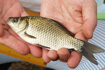 小ブナ釣り入門/フナの釣り具 | 釣り方・釣り具解説 | Honda釣り倶楽部 | Honda