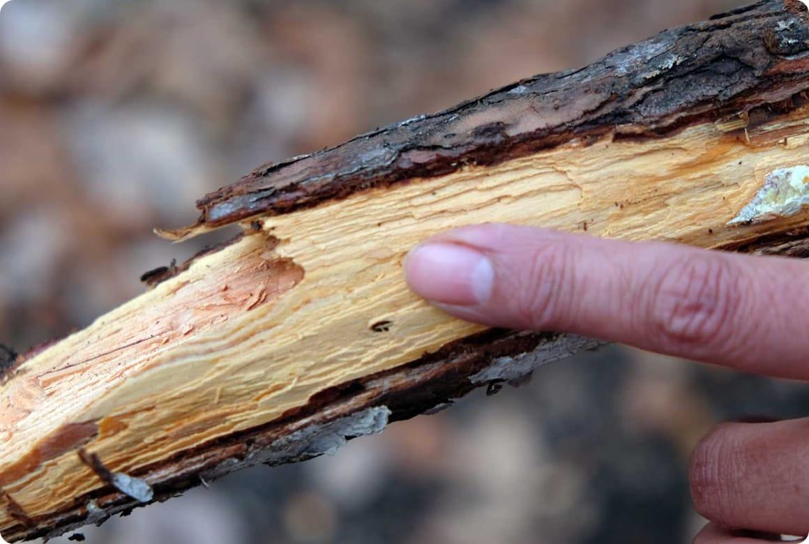 ナイフで薪作り! バトニングのやり方と フェザースティックの作り方 木